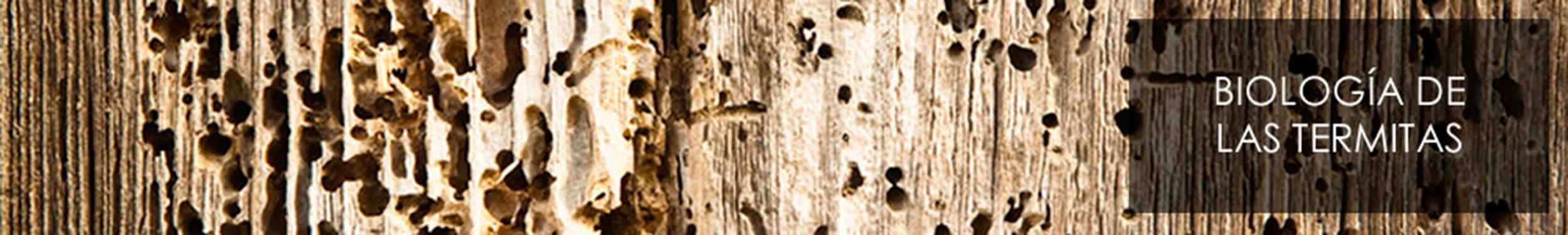 Servicio de control de plagas termitas