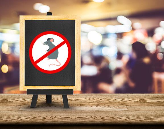 Iluroplagas Eliminar Plagas Restaurantes