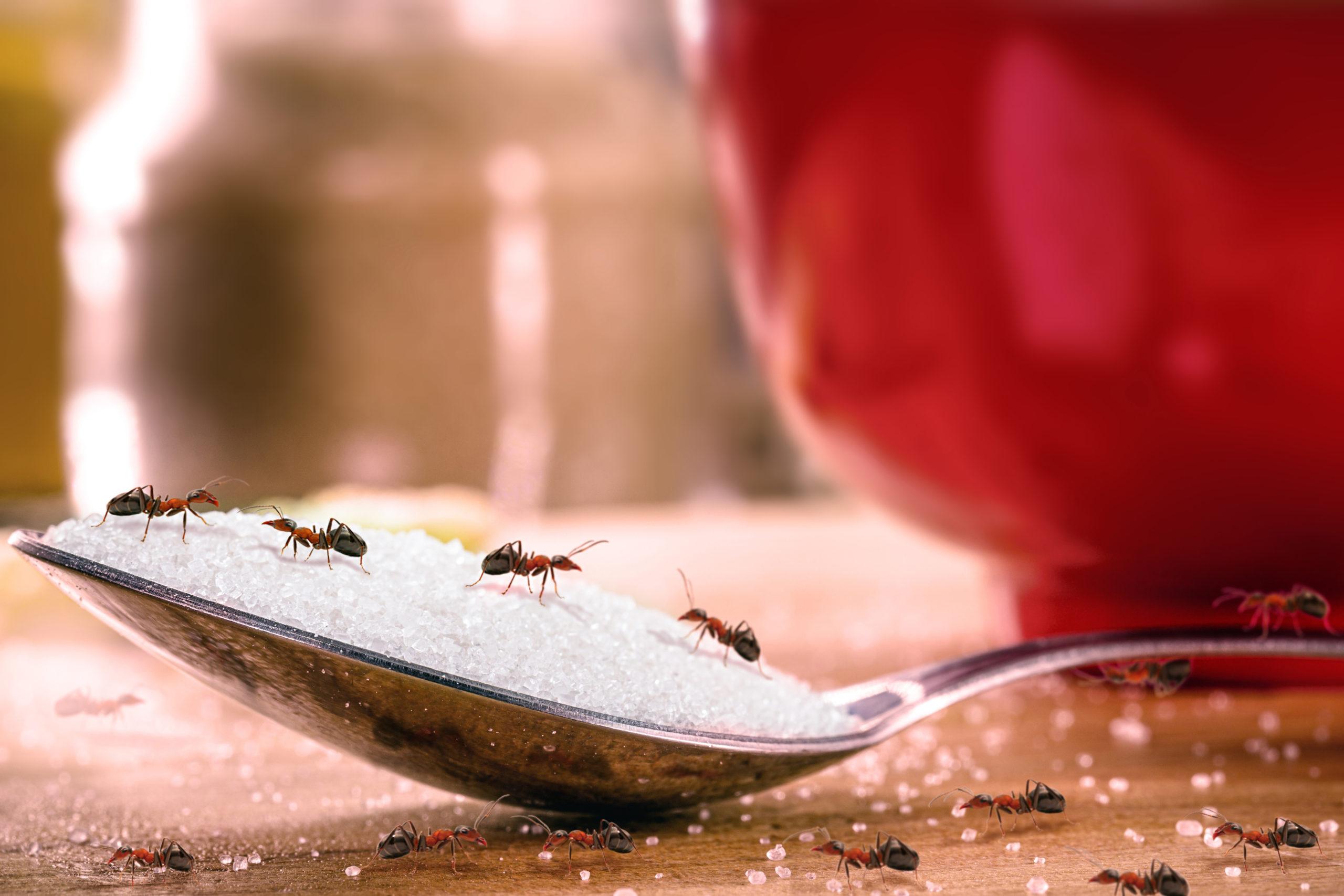 ¿Cuáles Son Las Plagas Más Comunes En Verano Y Cómo Combatirlas?